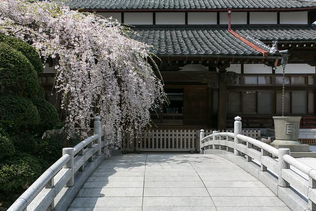 さいたまの桜 2014 #saitama