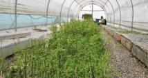 Programa de forestación con algarrobos en la mina y comunidades aledañas