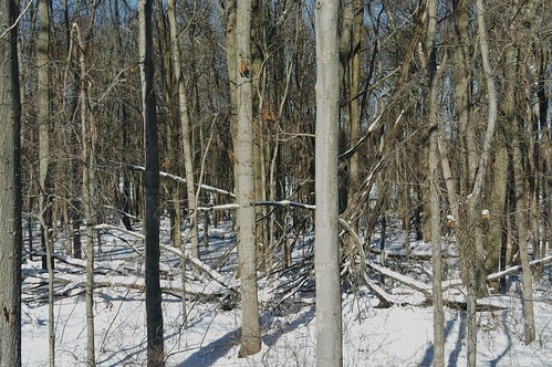 2014 Snowstorm No. 2