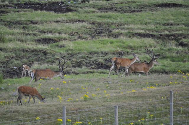 2013-07-27 Highland Wildlife Park