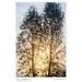 Two Trees, Autumn Dawn