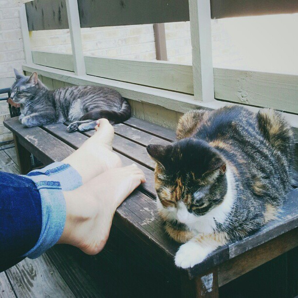 Lazy Saturday on the deck with my babies #caturday #catsofinstagram