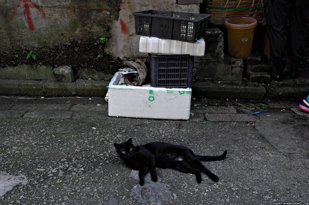 Gothic cat