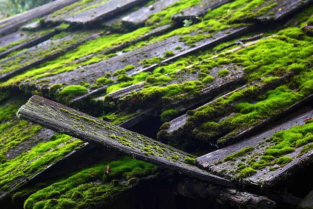 Sapa - house roof cover with green moss