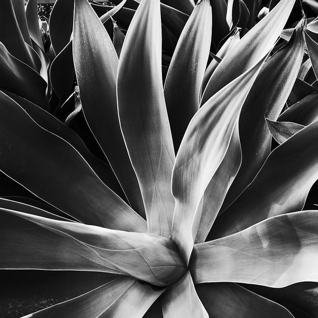 Succulent 1 (JPEG)