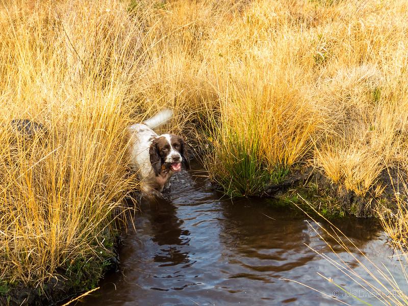 Max enjoys the stream
