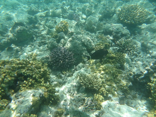 Coral reef and fish off the Reethi Beach