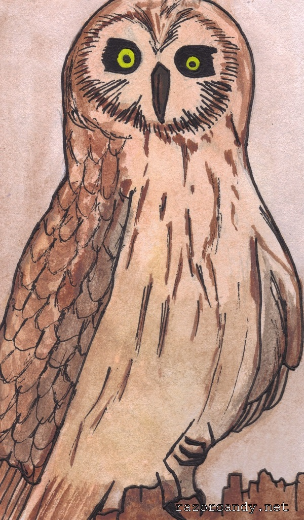02-10-2013 Owl