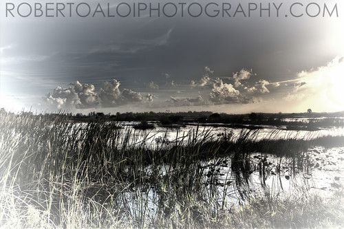 Arthur R Marshall Wildlife Refuge by Roberto_Aloi
