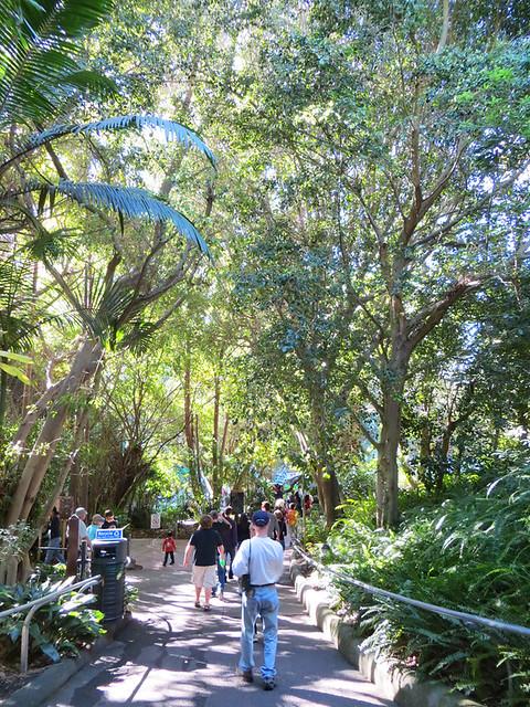 San Diego Zoo 9