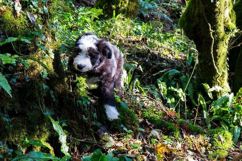 Juno's first walk
