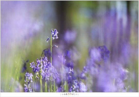 Alle bloemen staan rechtop en geven een mooi verticaal lijnenspel die synchroon lopen met de verticale boomstammen