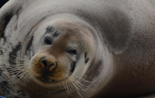 otto von Svalbard