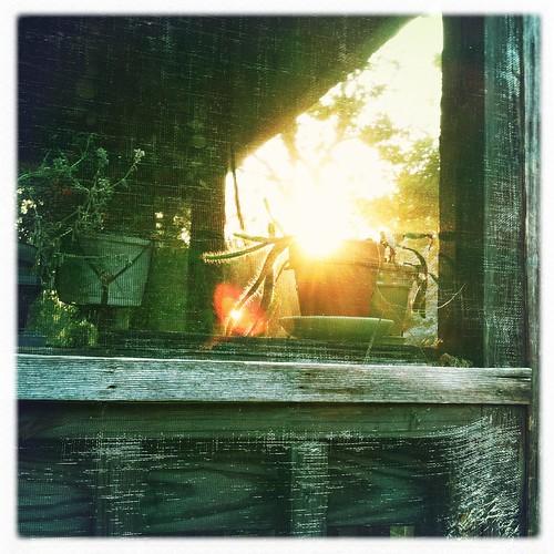 sunset and cicadas