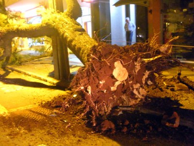 Ávore caída