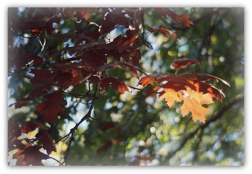 Minnesota Leaves