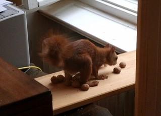 Eichhörnchen mag keine Grissinikekse 8