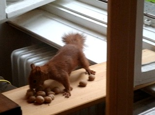 Eichhörnchen mag keine Grissinikekse 4