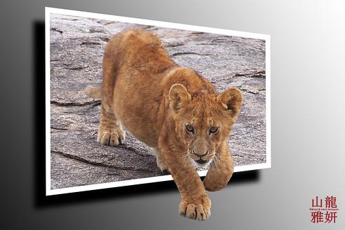 OOB Lion Cub