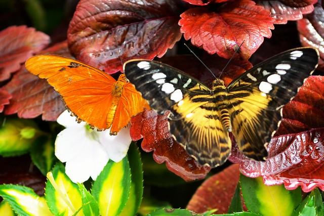 Butterfly #10