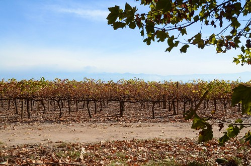 Wine ranks of Maipu