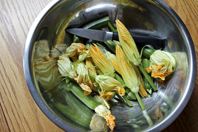 zucchini flower harvest