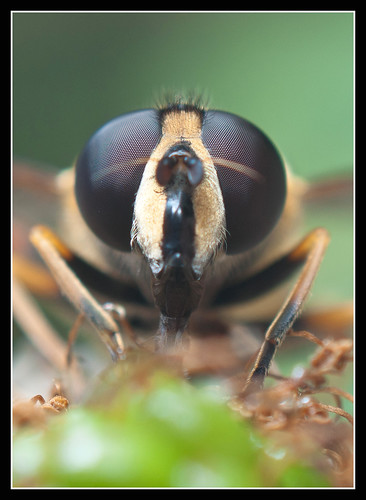 Hover Fly by jonny.andrews65