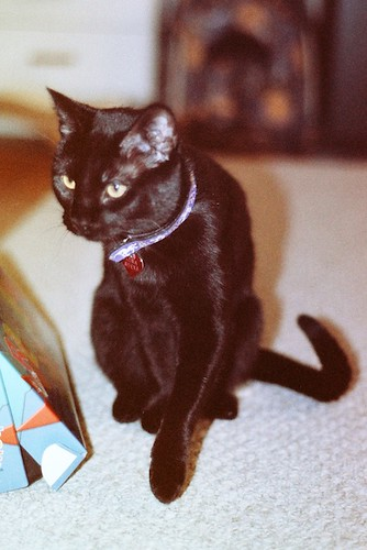 Crouching Pico-Panther