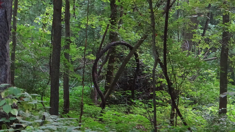 DSC03635 liana lost valley 200713