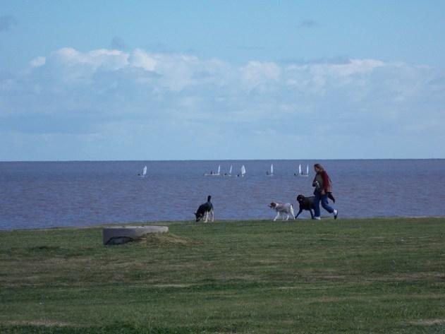 Mulher passeando com seus cães e uma regata ao fundo