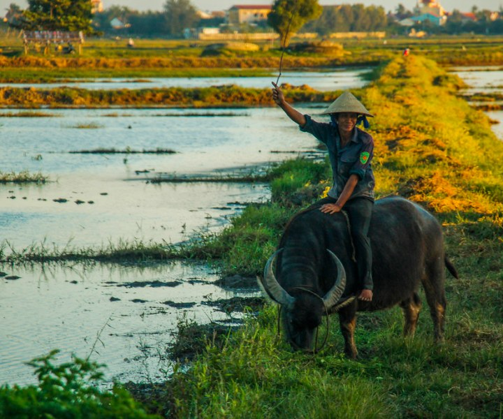 hvad skal man bare se i Vietnam?