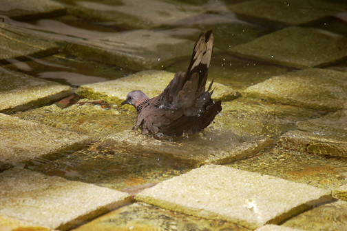 dove bath