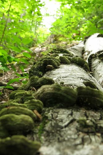 cottageshrooms