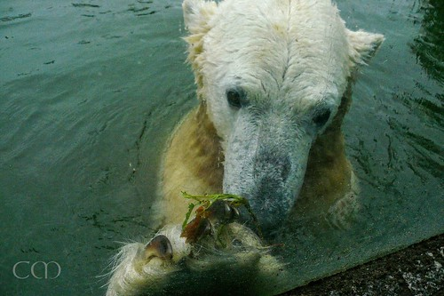 Knut 14 September 2010