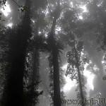 07 Viajefilos en Australia. Dorrigo Rainforest NP 38
