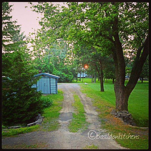 July 10 - my view {you can just see the sunrise from my living room window; looking down the driveway} #photoaday #sunrise #home #princeedwardcounty #morning