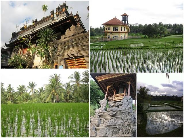 Bali Ubud Rice fields