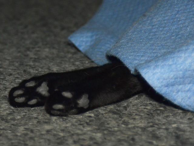 Luna's Paws
