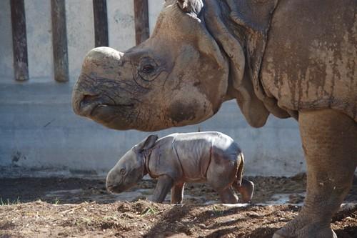 Terra Natura Benidorm Rinocerontes