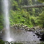 07 Viajefilos en Australia. Dorrigo Rainforest NP 42