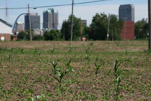 Downtown St. Louis Urban Farming