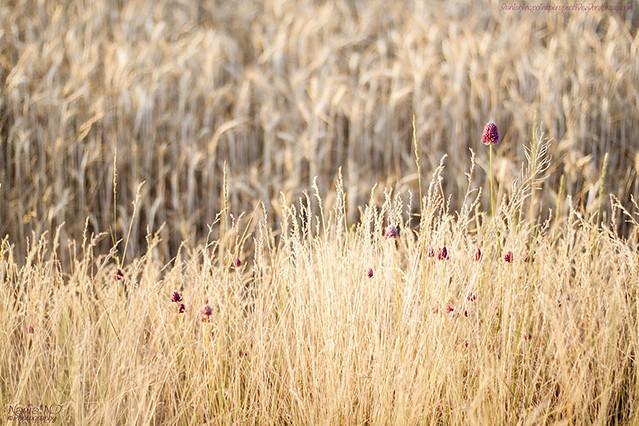 Pozondón entre campos #6