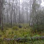 02 Viajefilos en Australia. Barrington NP 11