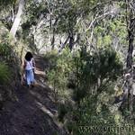 04 Viajefilos en Australia. Wollomombi 05