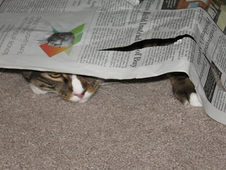 cat_under_newspaper