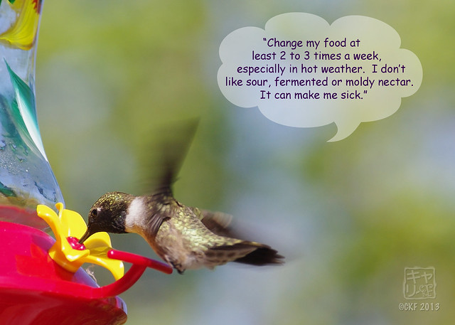Hummingbird Dialogue 4