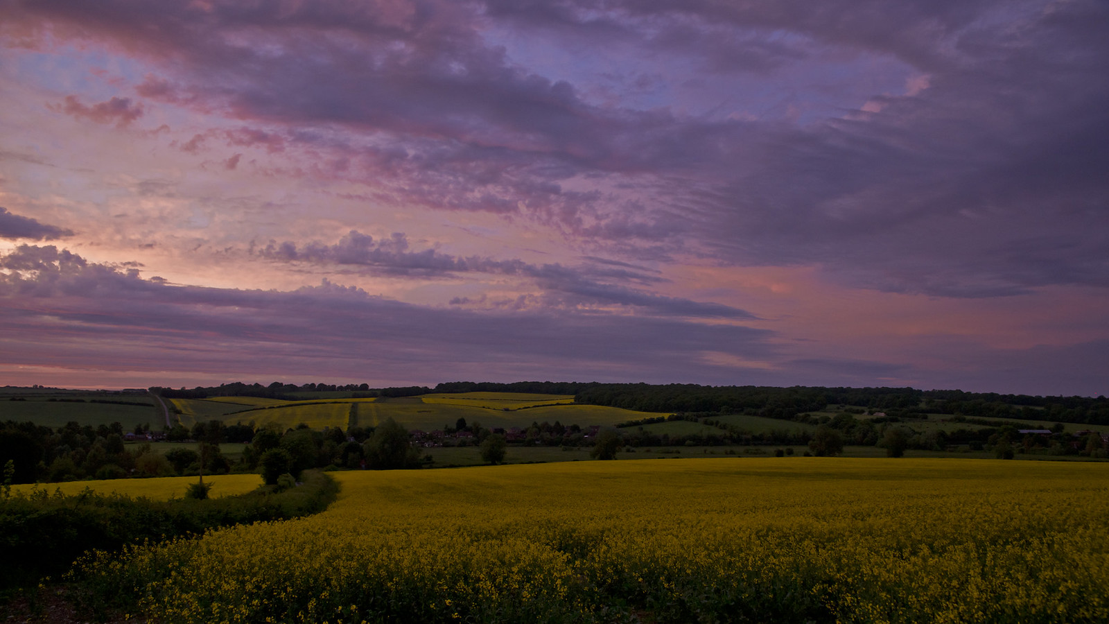 Ragged Pinks and Purples Above a Patchwork of Yellows...