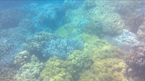 Jungla de corales