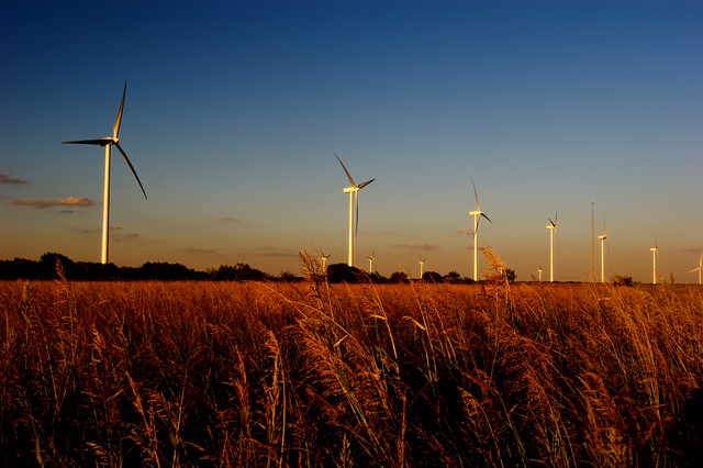 Wind farm at sunset in a rural country setting with a whaet field blowing in the wind,  photographic art, for home and office décor.