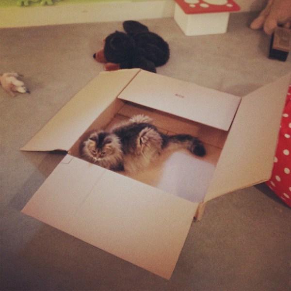 Classic move, Claire #boxedcatsofinstagram